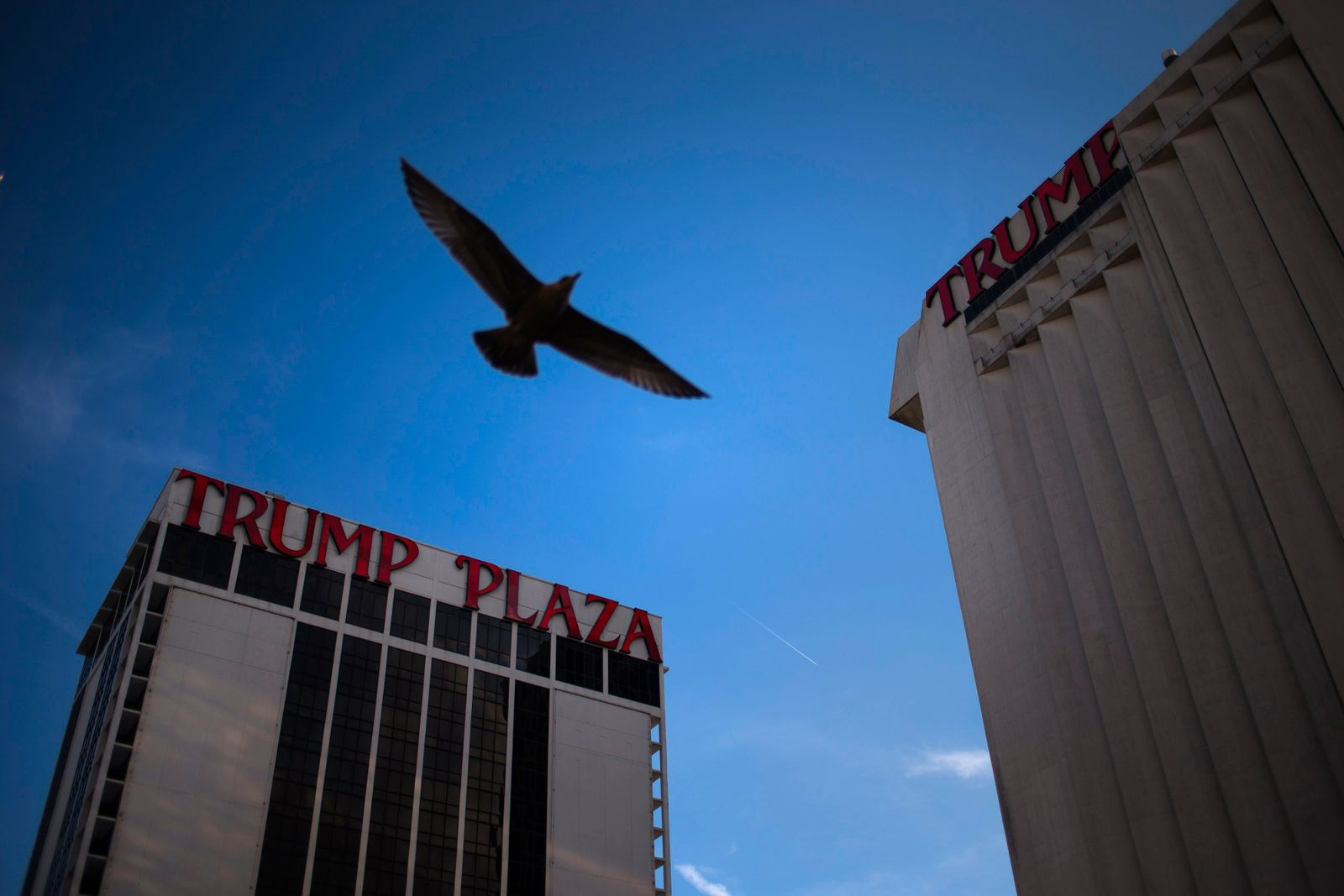A seagull flies past the Trump Plaza Hotel and Casino, one of two casinos owned by Trump Entertainment Resorts, in Atlantic City, New Jersey