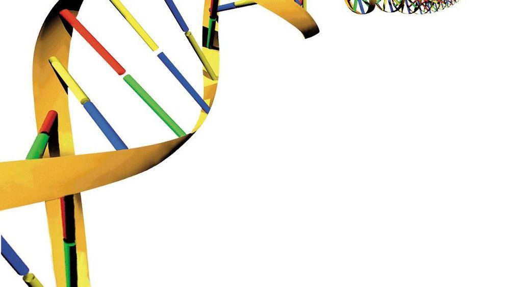 Epigenetik: Gut organisiertes Erbgut