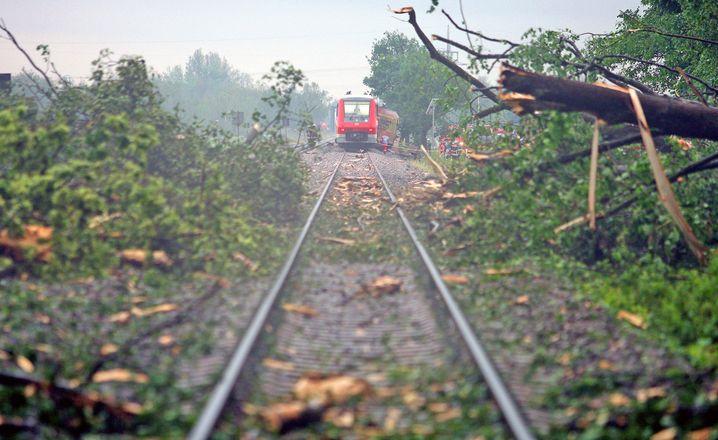 Baumreste auf Regionalbahnstrecke bei Baienfurt