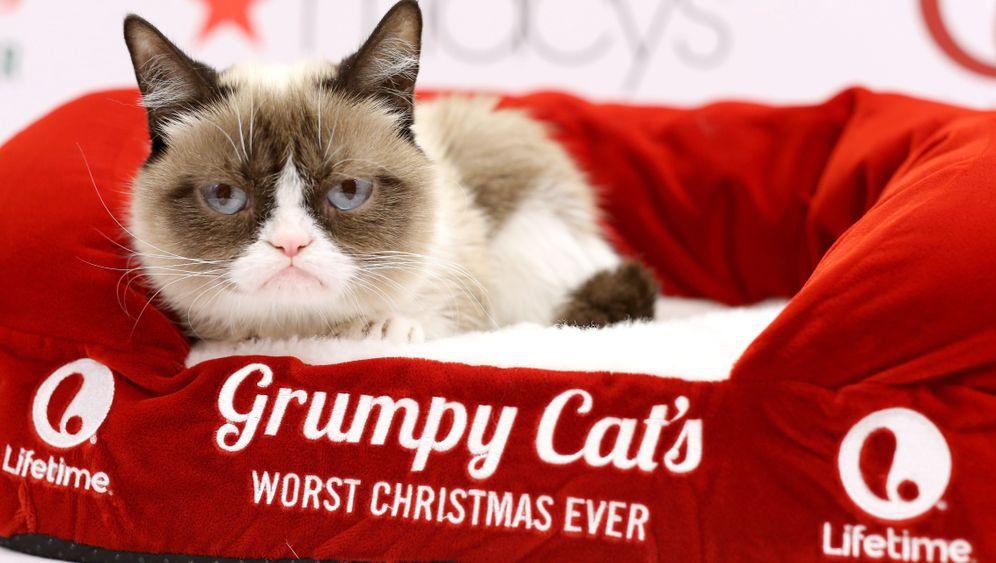 """Wertvolle Katze: Das Geschäft mit """"Grumpy Cat"""""""