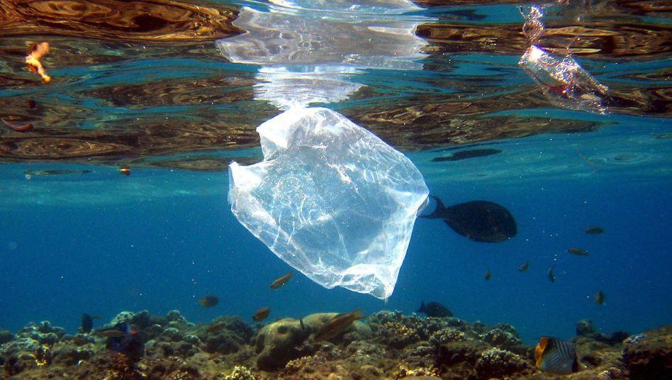 Tüte im Meer: Allgegenwärtige Plastikflut