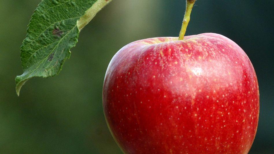 Frisch gepflückter Apfel: Regionale Produkte sind grundsätzlich besser als ausländische