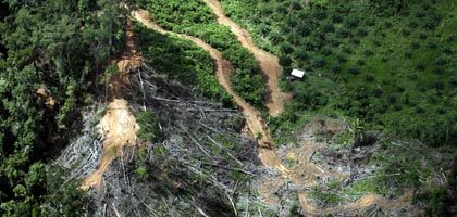 Abgeholzter Regenwald in Borneo: Abholzung könnte die Erderwärmung zusätzlich verstärken