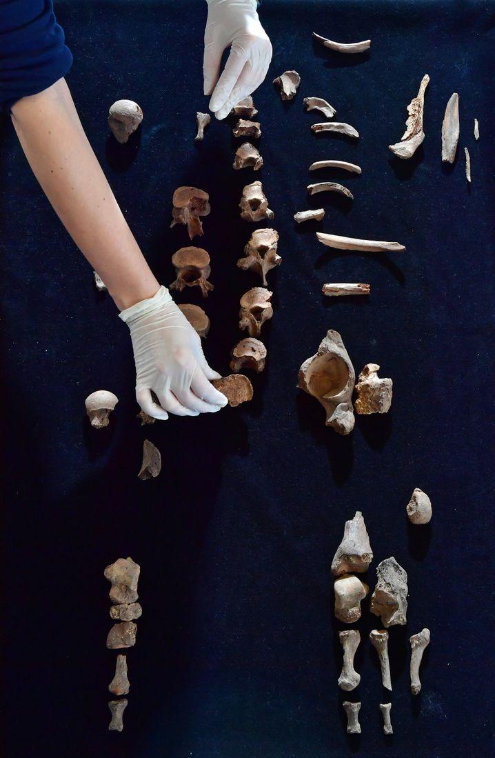 Sterbliche Überreste des Fürsten von Helmsdorf