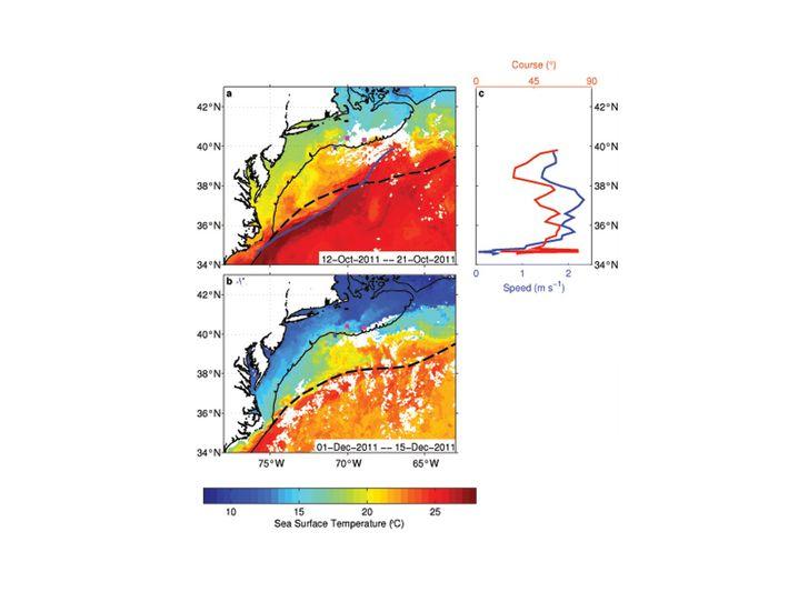 Neue Strömungsverhältnisse: Im Oktober 2011 schlängelte überraschenderweise der Golfstrom vor der Küste Neuenglands (blaue Linie). Das Wasser erwärmte sich um sieben Grad. Normalerweise schwenkt die Strömung dort nach Osten (gestrichelte Linie). Im Dezember 2011 hatte sich die Strömung normalisiert, das Wasser aber blieb wärmer als üblich.