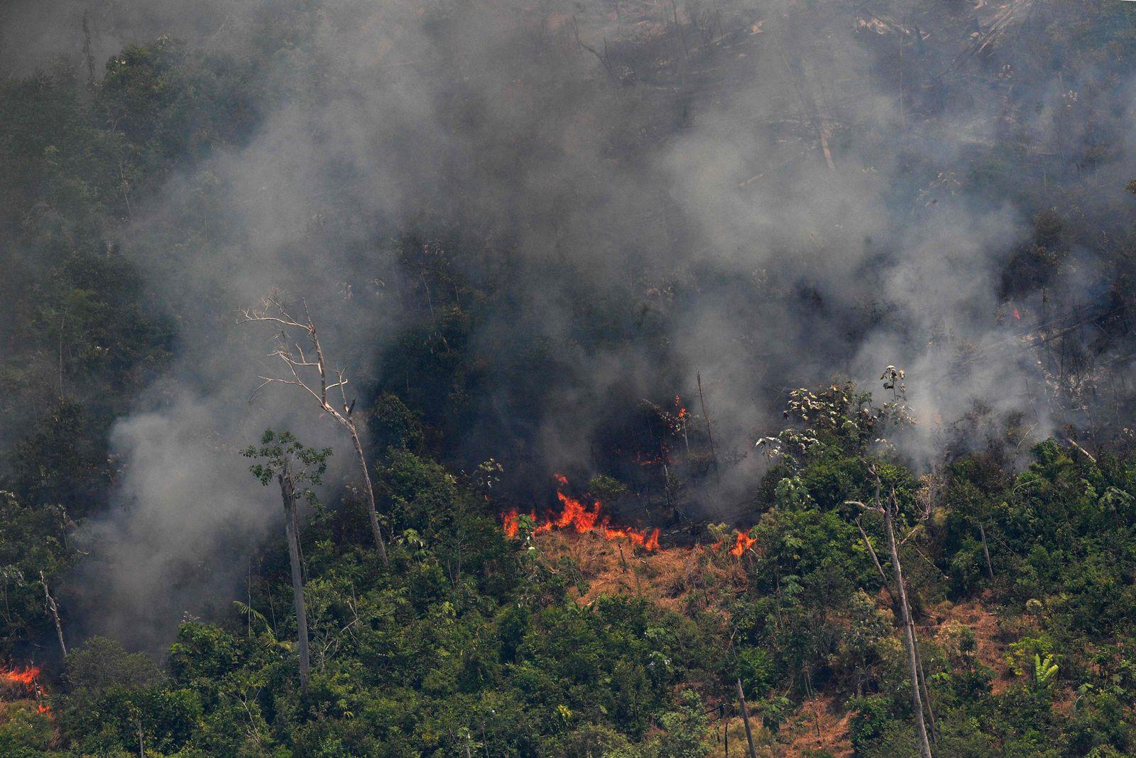 Amazonas / Waldbrand