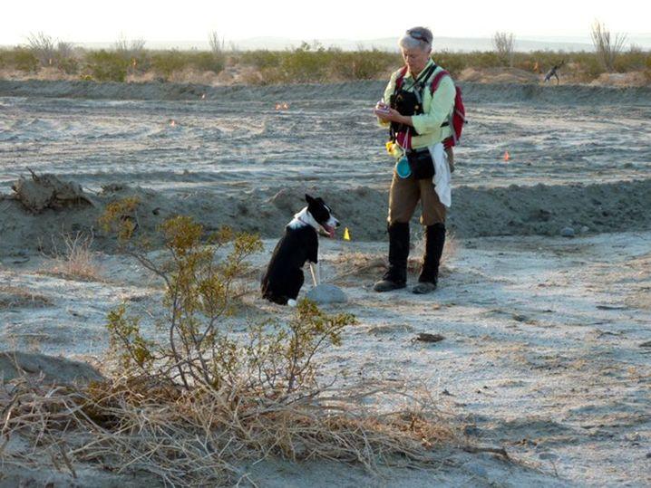 Feine Nase: Spürhund beim Training