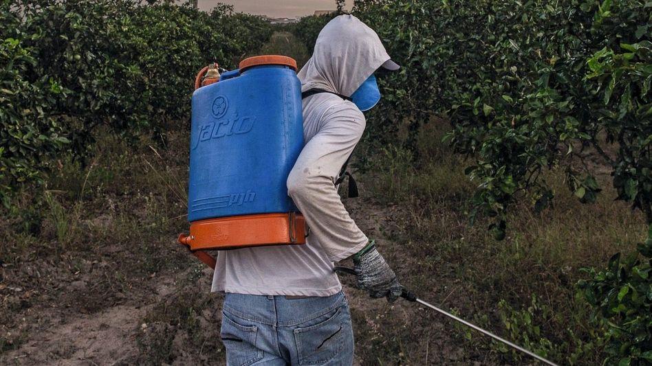 """Landarbeiter mit Pestizidkanister: """"Ich spüre den Gestank nicht mehr"""""""