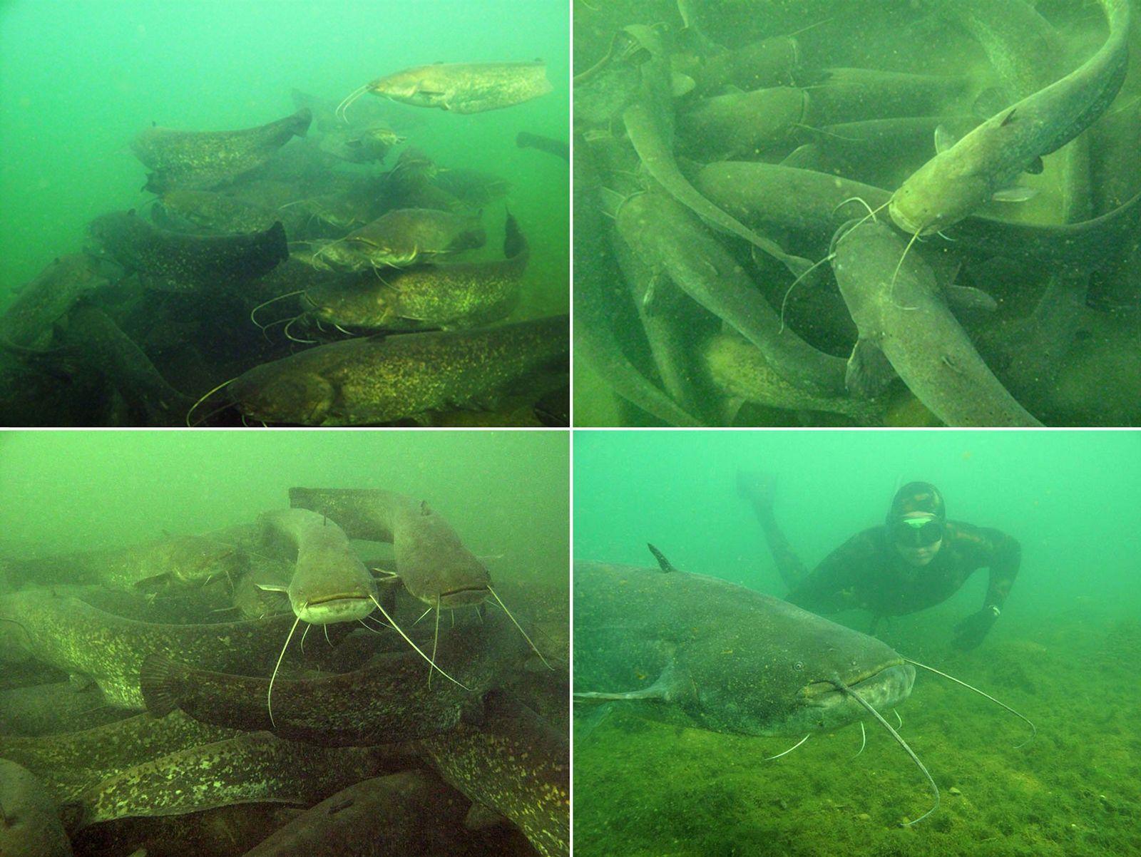 NICHT VERWENDEN Riesenfisch / Lyon / Rhone