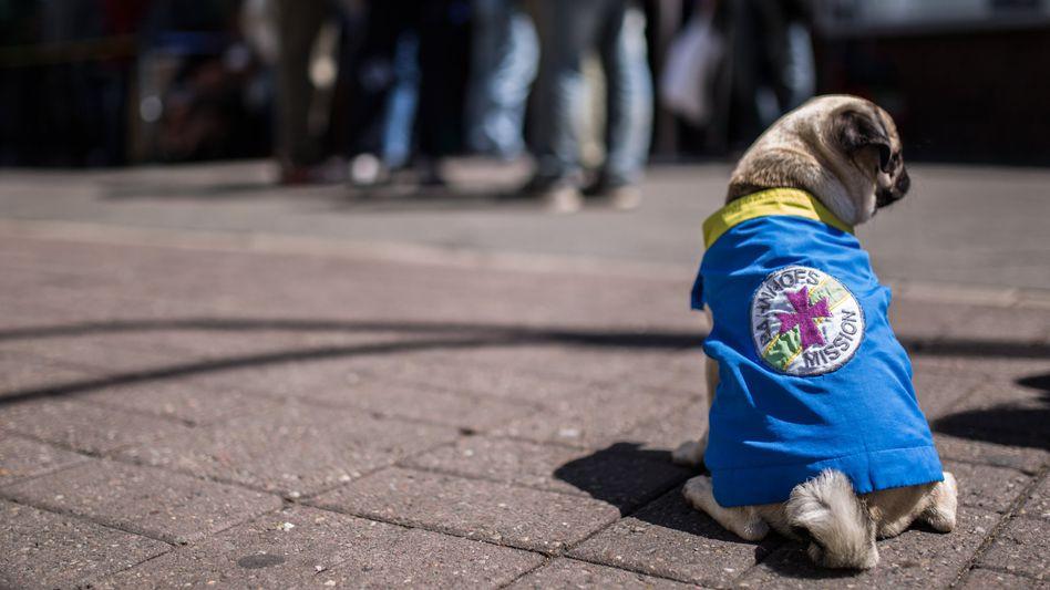 """Mops in """"Dienstkleidung"""": Arnold bei der Bahnhofsmission"""