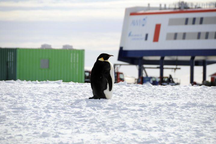 Pinguin und Forschungsstation (Archivbild): Mindestens 36 Corona-Infizierte sind auf Chiles Station »Bernardo O'Higgins Riquelme« registriert worden.