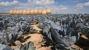 Deutschland steuert auf die nächste Dürre zu