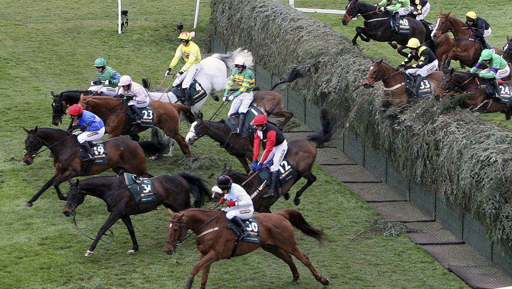 Hindernisrennen Grand National: Tragödie um zwei Rennpferde