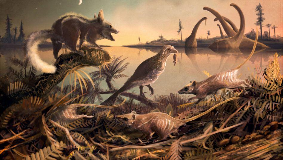 Rattenähnliche Säugetiere (Illustration)