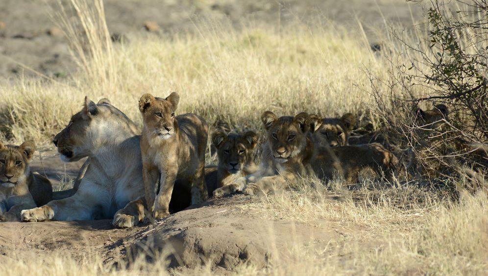 Safaris in Afrika: Keine Angst vor großen Tieren