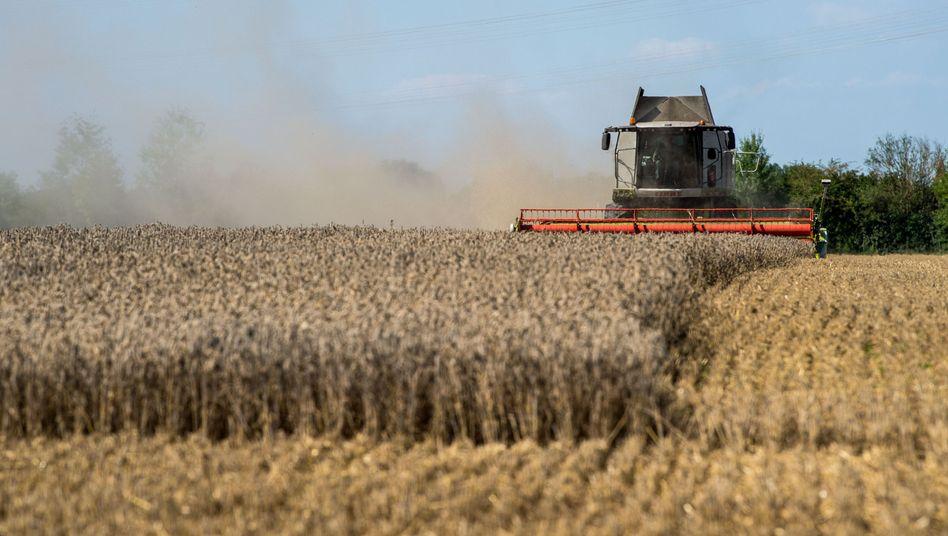 Mähdrescher auf einem Weizenfeld