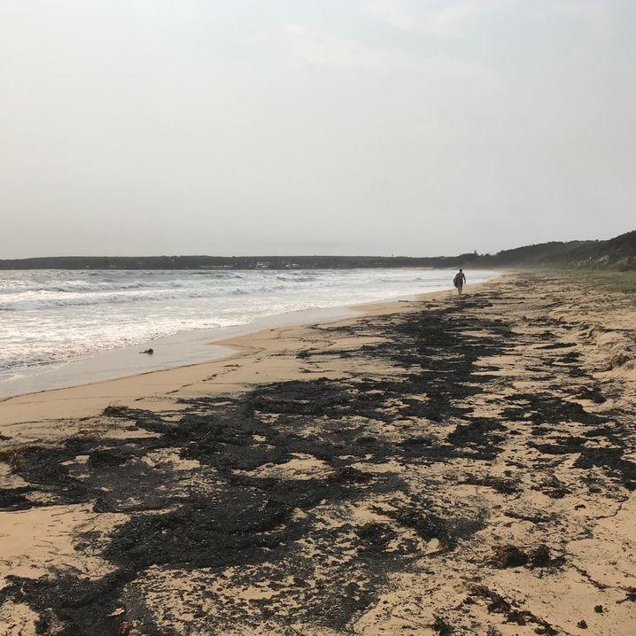 Currarong Beach Ende Dezember: Asche am Strand, Asche im Meer