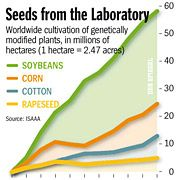 Genetically modified crops are seen by many as the solution to coming food shortages.