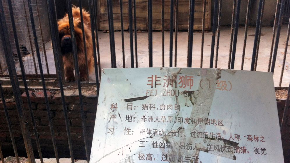 Hund als Großkatze: Zoo muss schließen