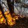 Am Amazonas wüten so viele Feuer wie seit 13 Jahren nicht mehr