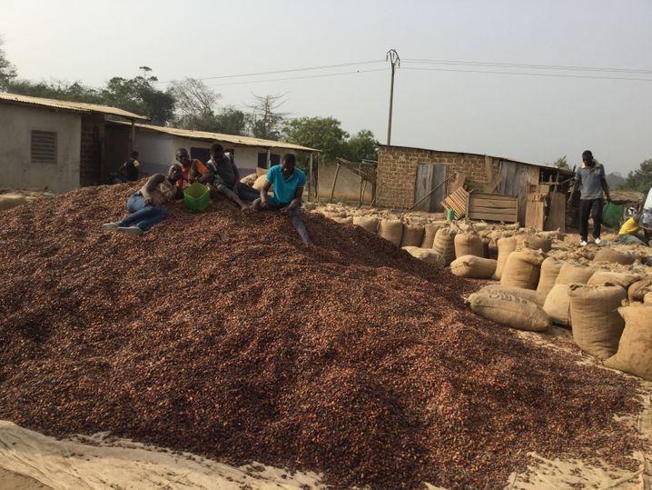 Junge Arbeiter auf getrockneten Kakaobohnen: Das beste Mittel gegen Kinderarbeit ist ein höherer Kakaopreis