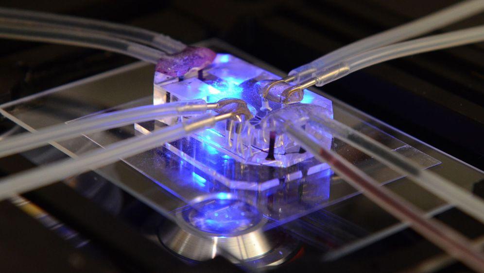 Menschmaschine: Organe als Chips
