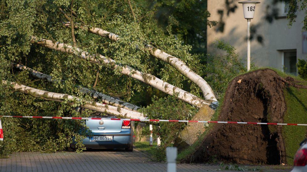 Unwetter in Hamburg: Abgedeckte Dächer, entwurzelte Bäume