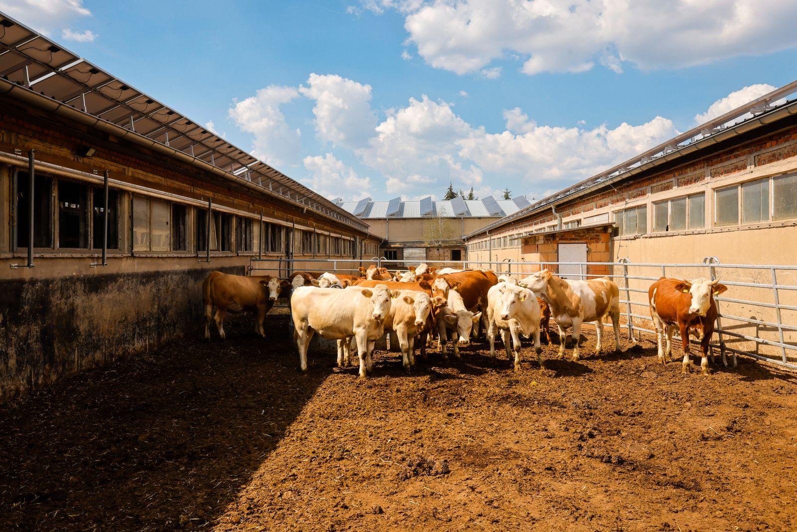 Wittichenau, Oberlausitz, Sachsen, Deutschland - Rinderställe, ehemalige LPG-Gebäude jetzt mit Solardach, auf dem famili