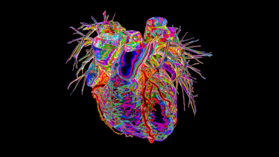 The heart and its blood vessels can experience significant damage.