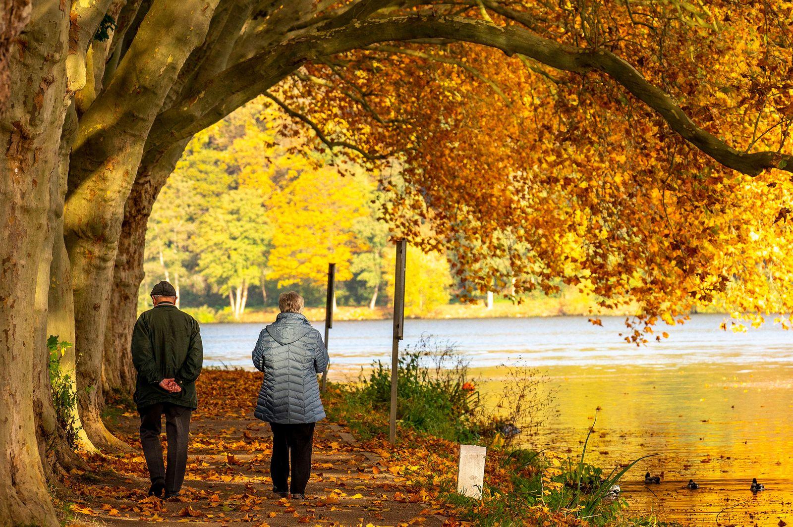 Platanen Allee, Uferweg am Baldeneysee, bei Haus Scheppen, in Essen, Herbst, NRW, Deutschland, Ruhrgebiet *** Platanen A