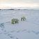Ein schreckliches Jahr für Eisbären, Koalas und Nashörner