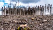Warum CDU und CSU keine Klimaschutzparteien sind