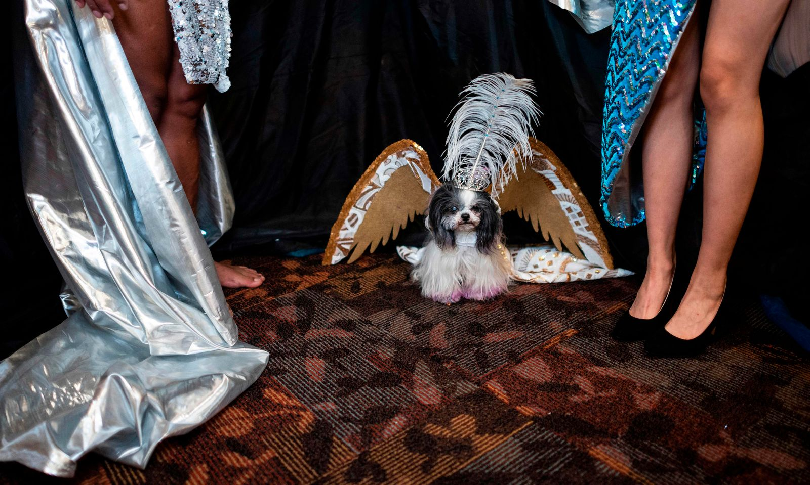 US-ANIMALS-DOG-FASHION-OFFBEAT