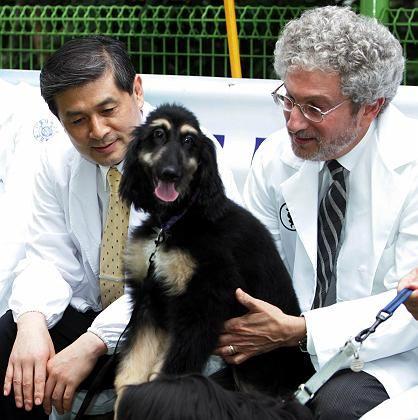 """Ehemalige Partner Hwang und Schatten mit angeblichem Klon-Hund """"Snuppy"""": Hwangs Forschung steht unter Generalverdacht"""