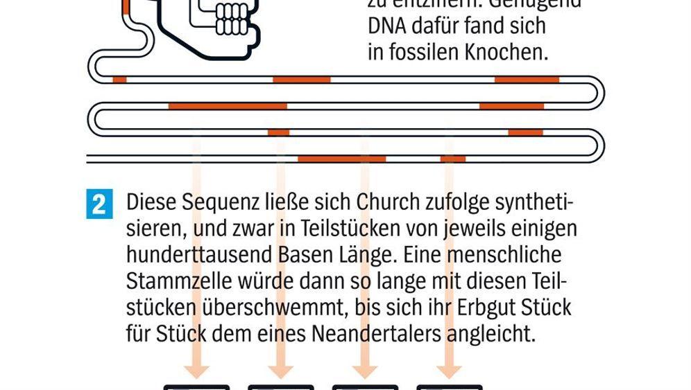 Genom-Forscher Church: Vorfreude auf das Neandertaler-Baby