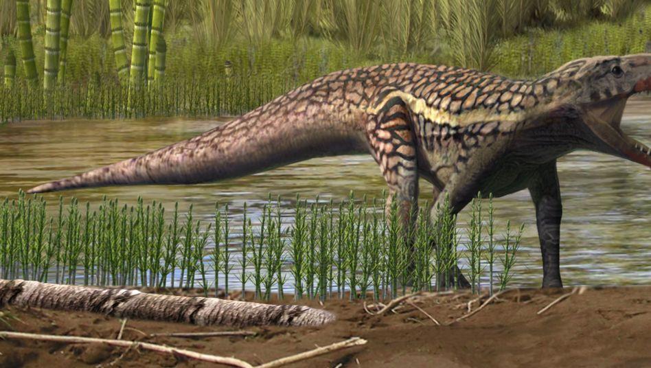 Archosauromorph: Kein Krokodil, kein Dinosaurier - aber irgendwas dazwischen