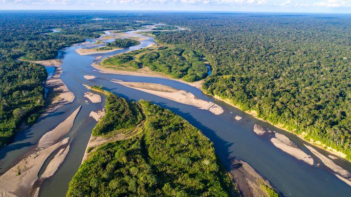 Unberührter Regenwald im Amazonasbecken: Vom Aussterben bedroht