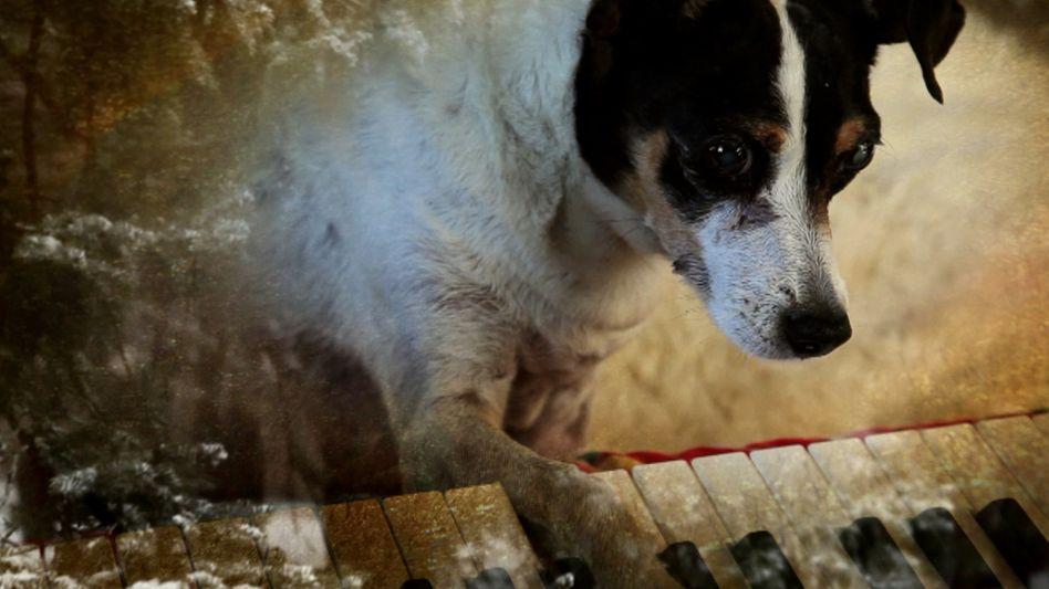 "Filmessay ""Heart of a Dog"": Das etwas andere Tier-Video"