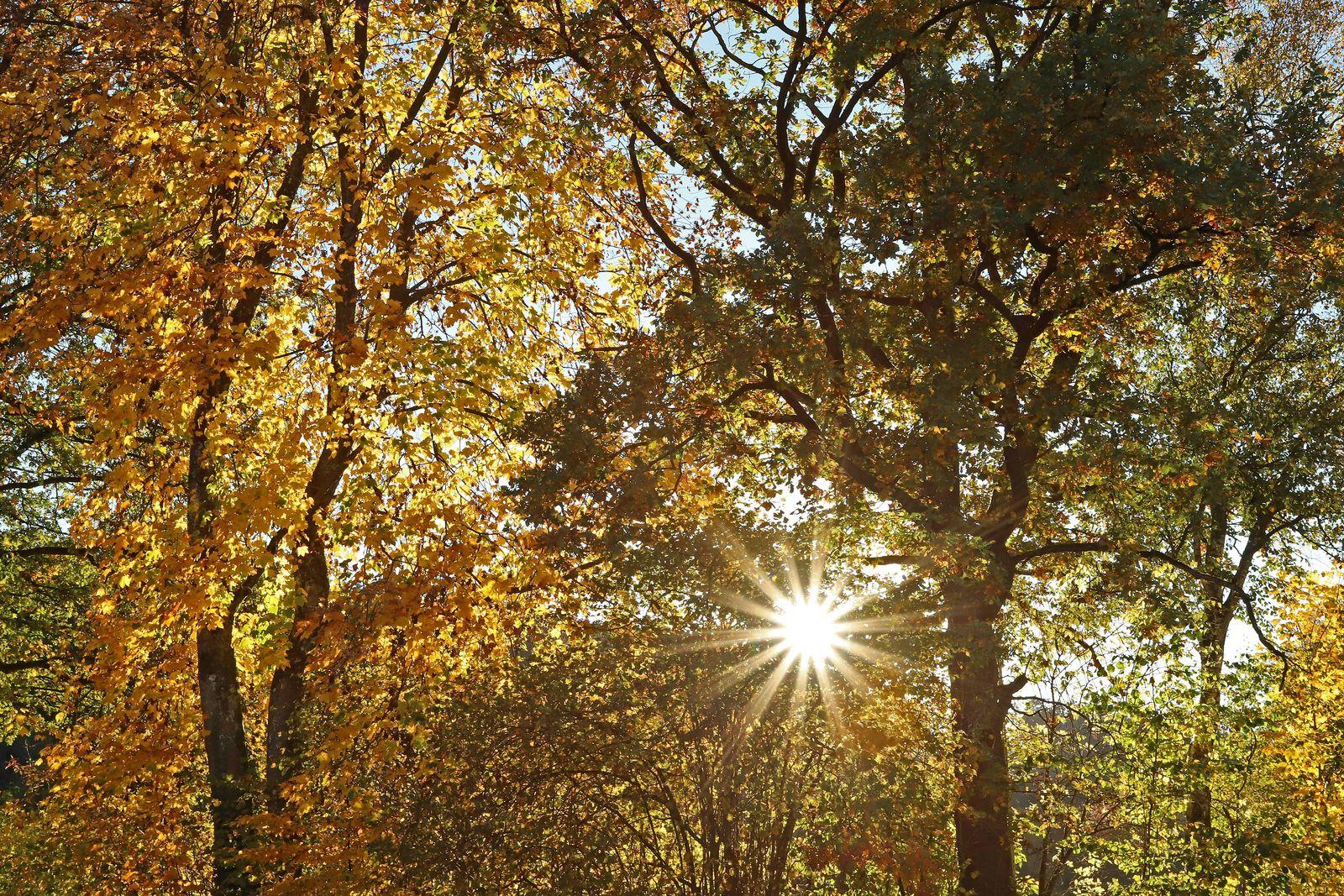EINMALIGE VERWENDUNG Herbststimmung