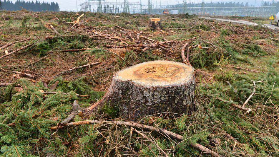 Laut Satellitenbildaufnahmen könnten bis zu 50 Prozent mehr Bäume gerodet werden