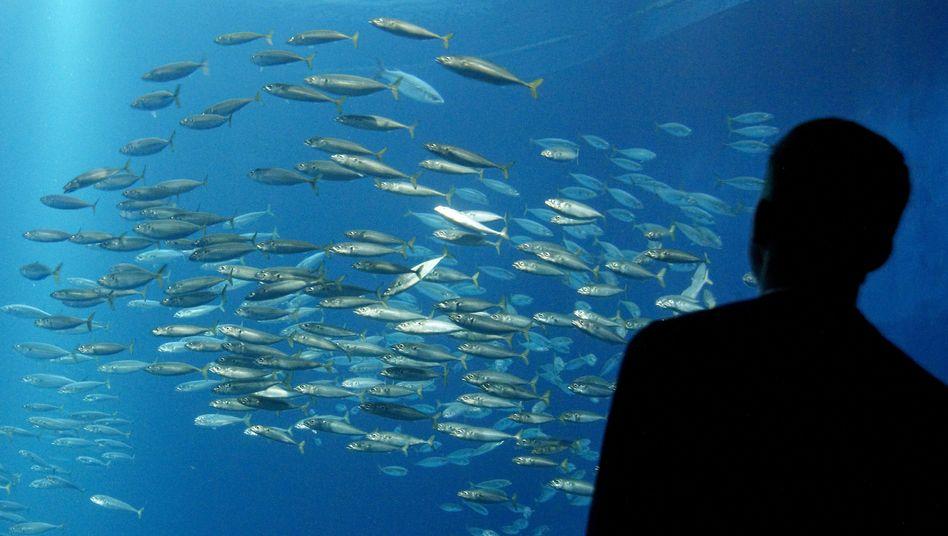 Fische im Ozeaneum Stralsund: Forscher warnen vor leergefischten Meeren