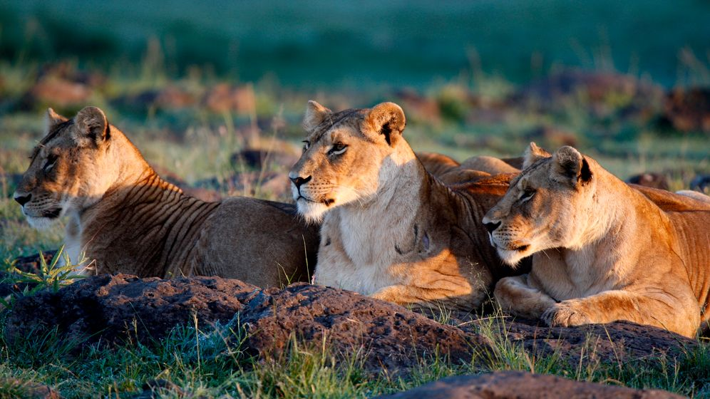 Photo Gallery: A King Without a Kingdom