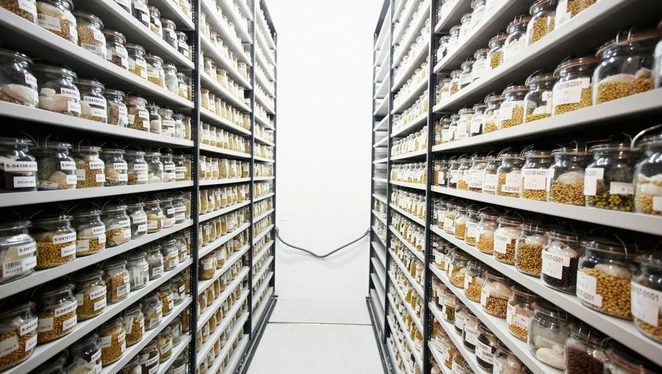 Saatgutsammlung im IPK-Kühlhaus: Bibliothek des Lebens