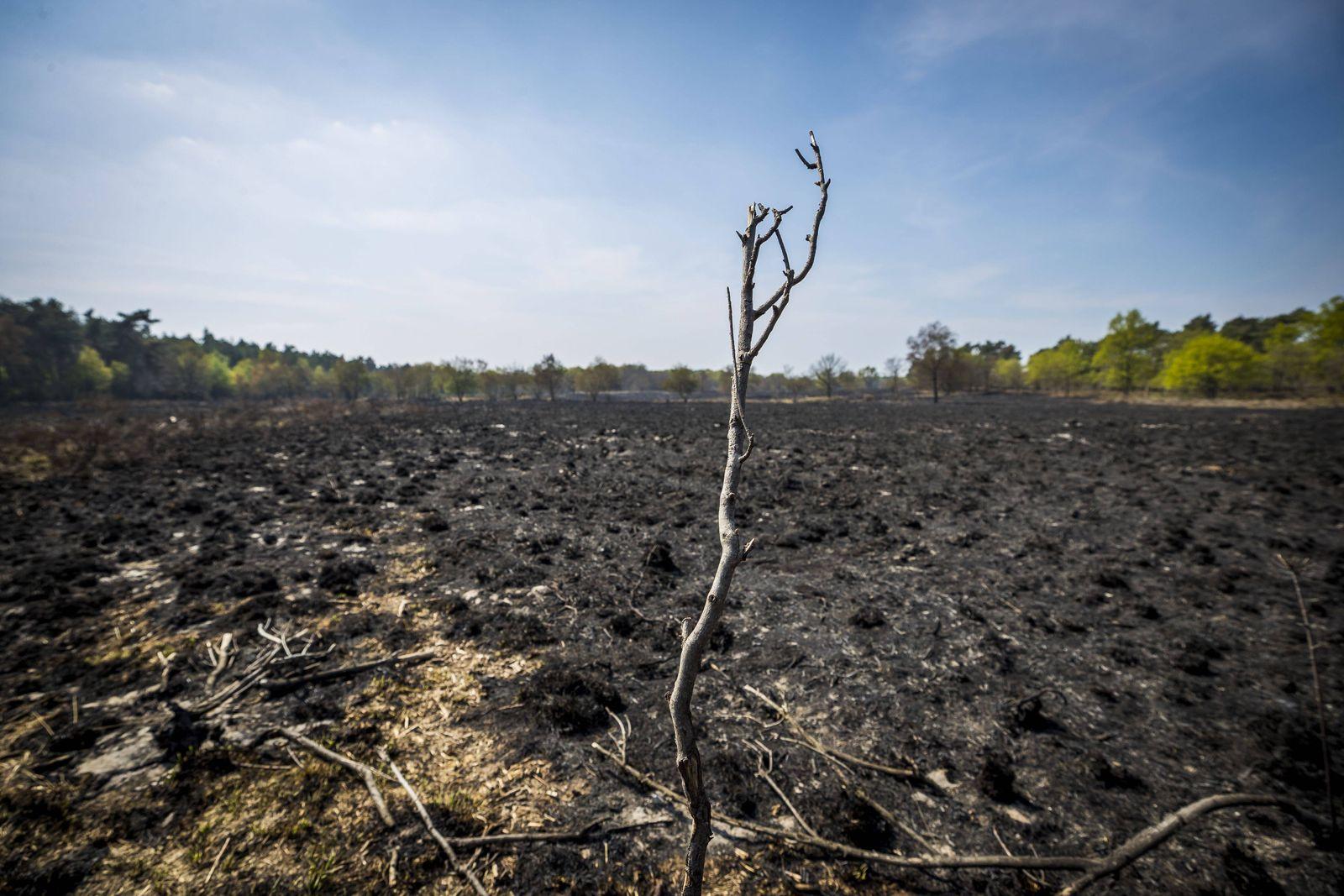 2020-04-24 16:17:47 HERKENBOSCH - Verbrande heide in het natuurgebied de Meinweg waar een grote brand gewoed heeft. ANP