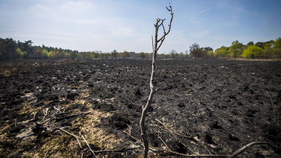 Verbrannte Fläche im niederländischen Naturschutzgebiet De Meinweg