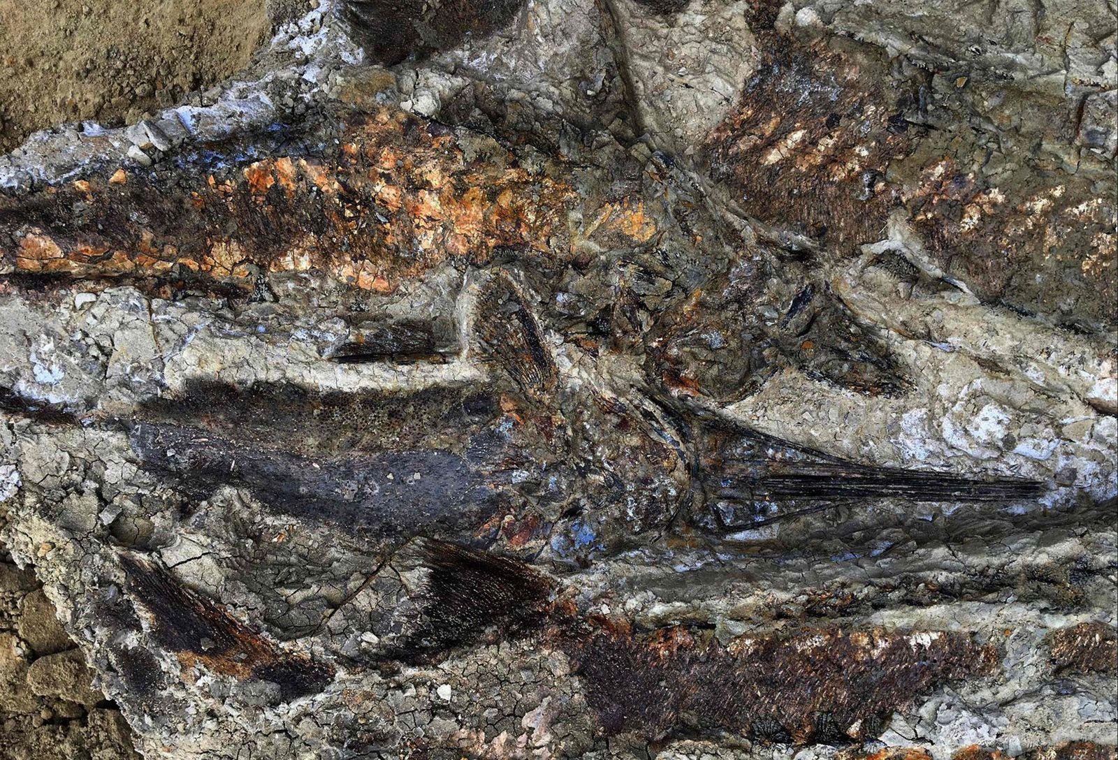 Fossilien/ Meteor/ North Dakota