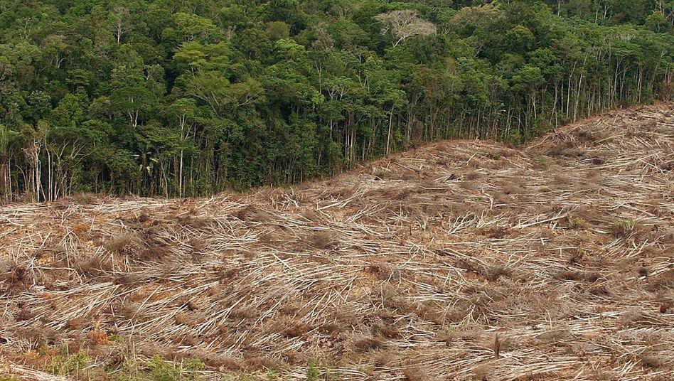Gefällte Bäume in Brasilien (Archiv)