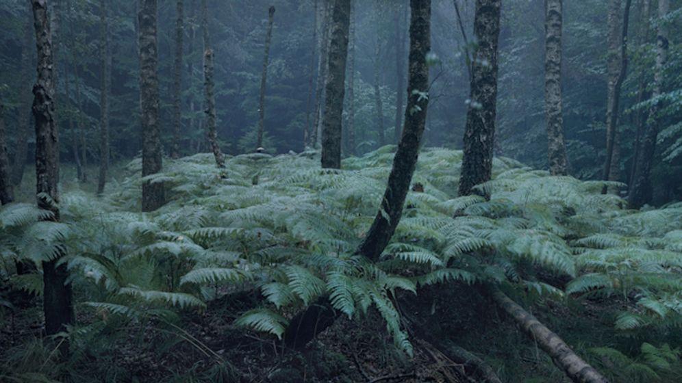 Wald-Fotografie: Über allen Gipfeln ist Ruh'