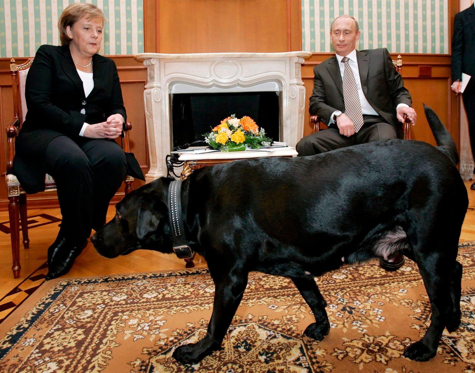 Putins Hündin Koni weicht ihrem Herren nicht von der Seite