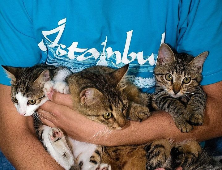 Animal lover Ismail and his kittens